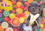 14 Frutas que tu bulldog francés puede comer