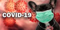 Coronavirus y bulldog francés