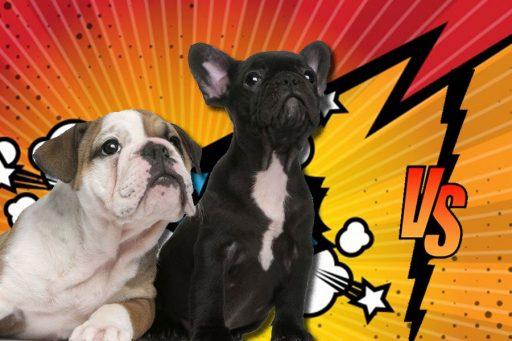 diferencias bulldog frances e ingles