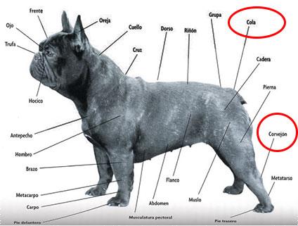 características físicas del cuerpo y cola