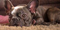pérdida de pelo en perros