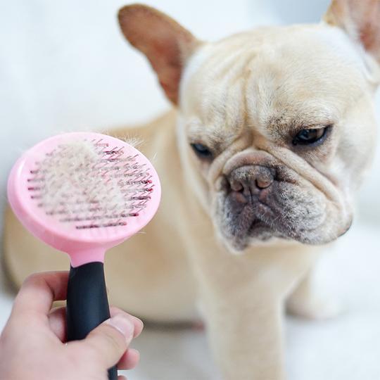 cepillarlo a diario para evitar la caída del pelo
