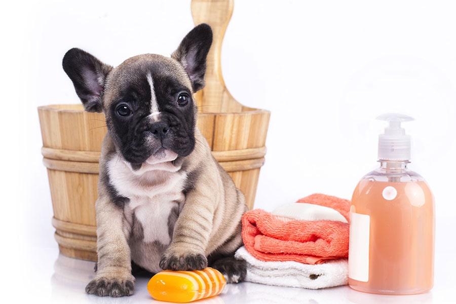 prevenir eczema humedo en perros