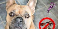 parasitosis en perros