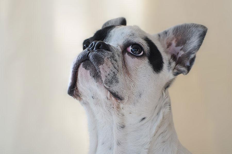 como desparasitar a un perro de forma natural
