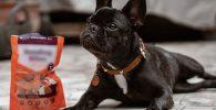 alimentos prohibidos para perros bulldog frances